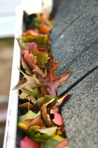 bigstock_Leaves_In_Gutter___2561082