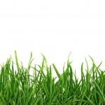 bigstock_Grass_On_White_Background_1561344