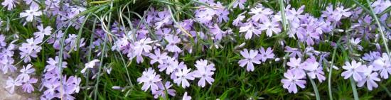 pretty flowers 3