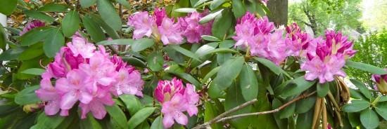 Marcie's flowers