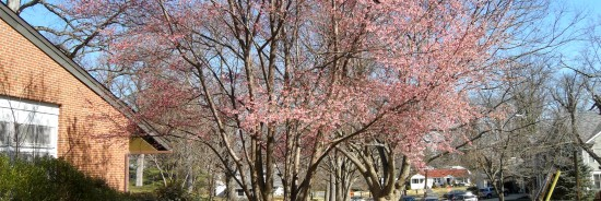 First Glimpse of Spring.... East Bethesda