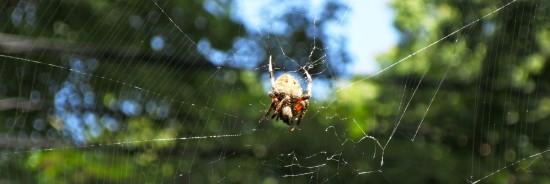 East Bethesda spider
