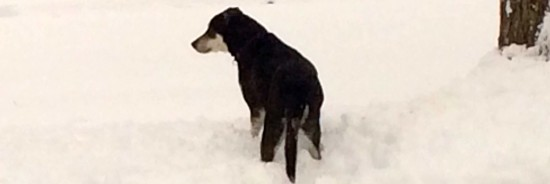 Willie in the snow