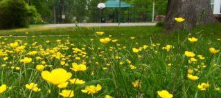 spring flowers Lynbrook Park