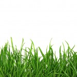 bigstock_Grass_On_White_Background_1561344