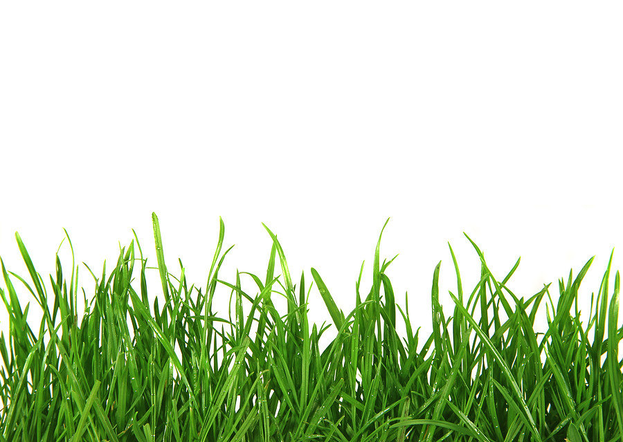 How to Create a Grass Banner in Adobe Illustrator
