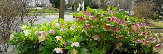 Claudia's flowers