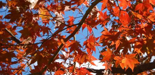 Goodbye Fall